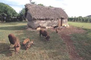 傳統棕櫚房屋