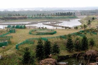 綠色景觀計畫