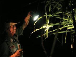 夜間生態旅遊