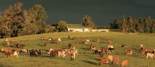 畜牧業帶來出口收入
