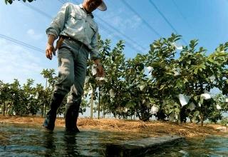 八堡圳灌溉