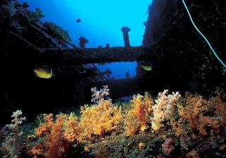 船殼上的軟珊瑚