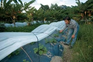 散植短期作物