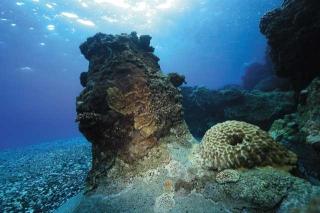 石珊瑚包覆的消波塊