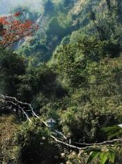 台中大坑山