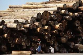 運抵棉蘭勿佬灣港口的木材