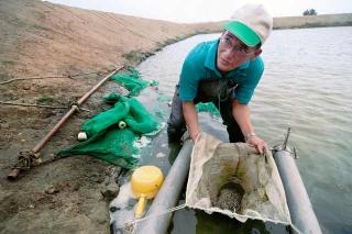 魚苗繁殖場