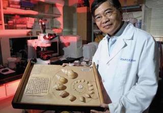 紀錄非洲大蝸牛成長史
