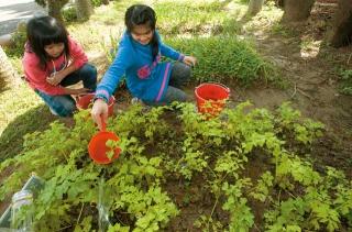 液肥澆灌菜園