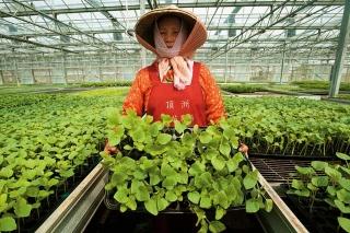 洋香瓜育苗農場