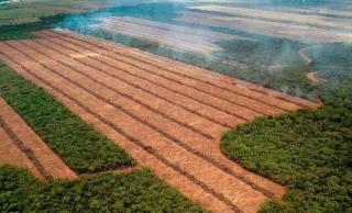 焚燒森林開墾黃豆田