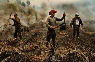 焚過野草的田地
