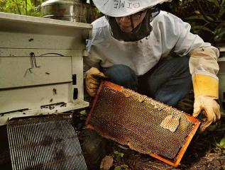 監控蜜蜂的進出行為