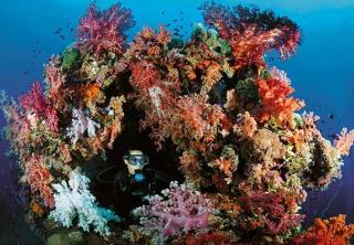 female diver exploring soft-coral covered sunken shipwreck