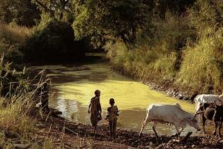 淤積河道優養化