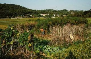 祖田改種水草