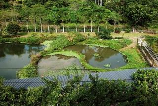 太極形狀生態池