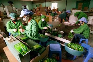 越南茶工廠的包裝作業