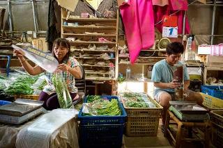 有機農場每天採收後直接交貨