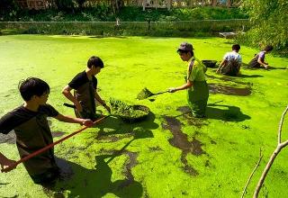清除生態池中藻類