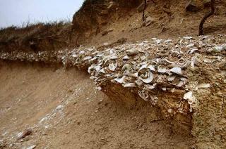 貝塚堆積層