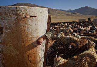 帕米爾高原牧地