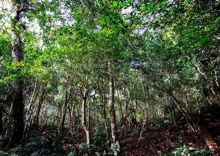 台灣茶樹種原金庫