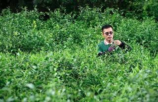 人在草木間