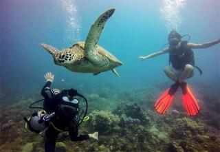 海龜屬保育類