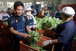 蔬果集散場