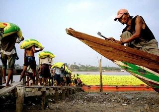 工人搬運白米上船