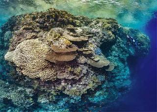 珊瑚大量群居