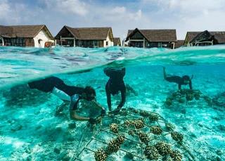 安裝支架讓退化珊瑚生長