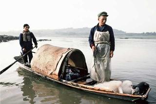 馴化水獺捕魚