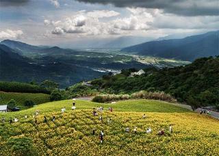 六十石山的金針花