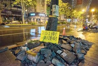 行道樹移植工程