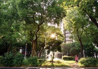 敦化南路分隔島行道樹