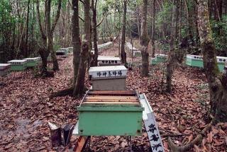 南投蓮華池林試所實驗養蜂場