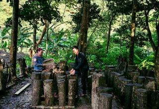 屏東高士部落林下段木香菇養殖