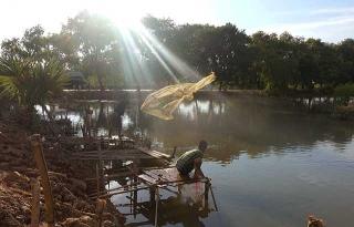 低窪淹水處捕魚