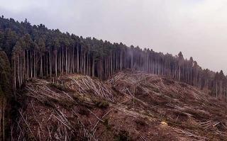 皆伐過後的林場