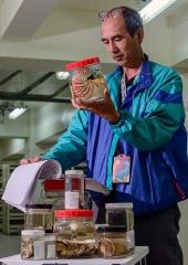 鸚鵡螺浸液標本
