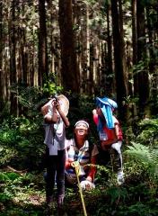 衡量大樹的高度