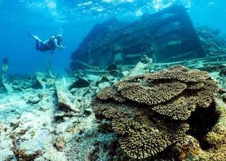 沉船殘骸成水下魚礁