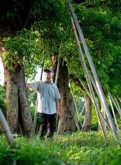 長年倡議護樹