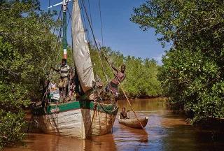 船隻航行於紅樹林