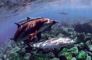 海豚是群體活動的生物