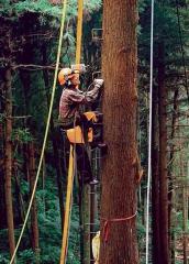 以登木釘爬上樹