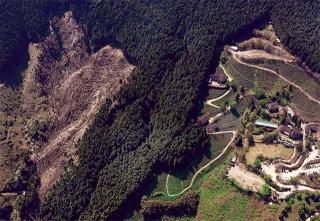皆伐後的人工林場