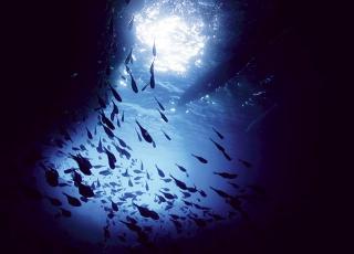 千百隻天竺鯛
